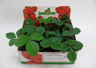Erdbeeren im 6er Deko-Karton