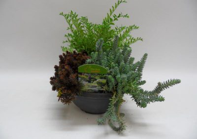Herbstmix-19-cm-Schale-b