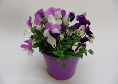 Viola corn. Trios T14