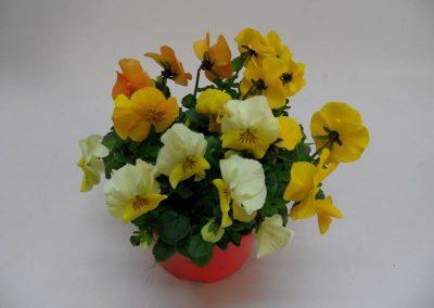 Viola corn. Trios T14 b
